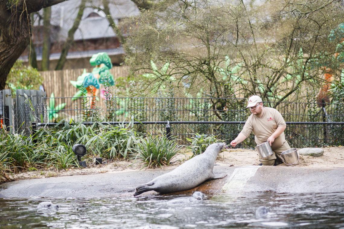 Geoffrey aan de slag als dierenverzorger in ZOO Antwerpen